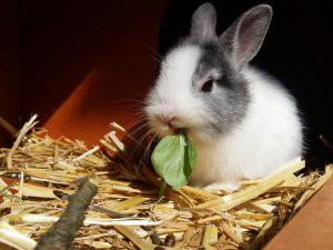 rabbit-2940275